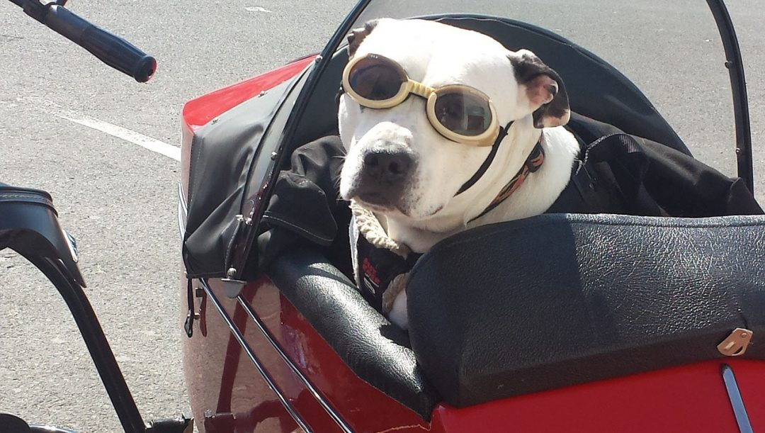 Trasporto cani in moto